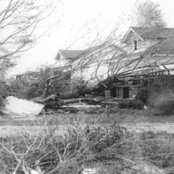 Uprooted trees in front of a house